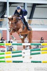 Верховые лошади породы Англо-рысистая