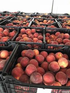Продам персики и нектарин из Греции