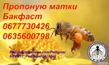 Бджоломатки Бакфаст