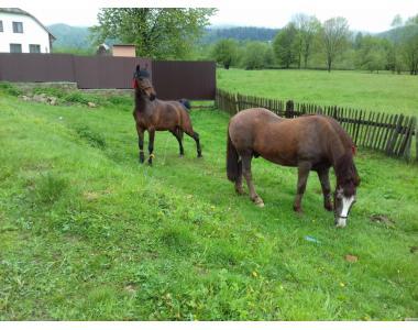 Продается пара лошадей
