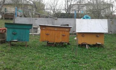 Продам ульи с пчелами