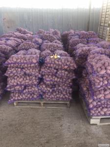 Продаем картофель высокого качества