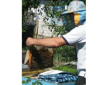 Продам бджолопакети 2014р