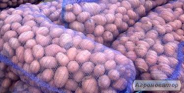 Продам картофель оптом на экспорт, все документы.