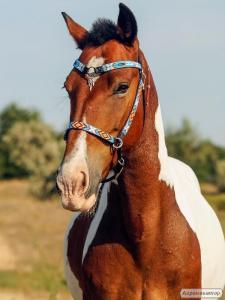 Коня хобі-класу під дитину