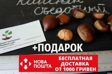 Каштан съедобный семена (8-10 грамм) 10 шт (Castánea satíva, посевной)