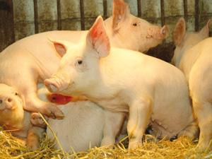 Пробіотики для тварин