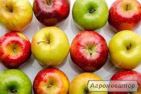 Купуємо яблуко свіже на переробку, Винницкая обл.