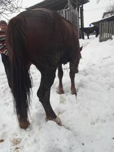 Продам Лошадь вася