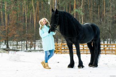 Фризские лошади всегда в наличии в Киеве