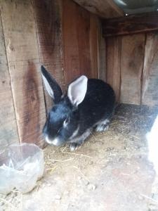 кролики рiзних порiд