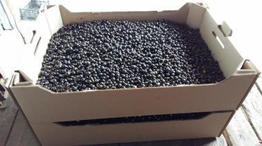 Продам ягоды смородины урожай 2018