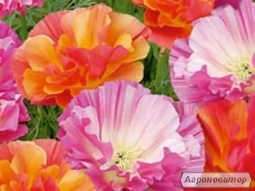 Продам насіння квітів!