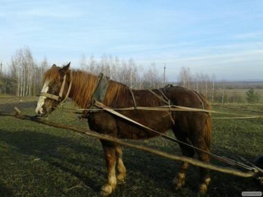 Продам лошадь торийской породы