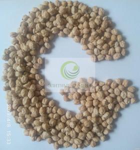 Нут, насіння