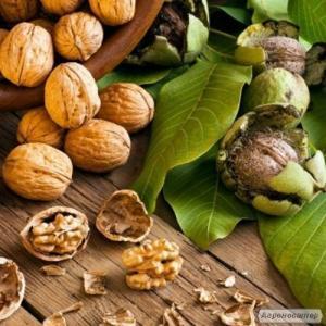 Саженцы Грецкого ореха (Привитые)