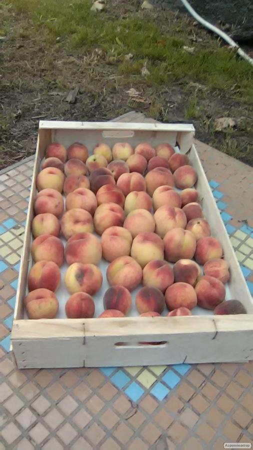 Ящик под персик
