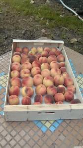 Ящик під персик