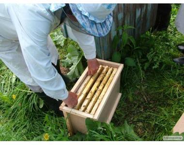 Продаём пчелопакеты