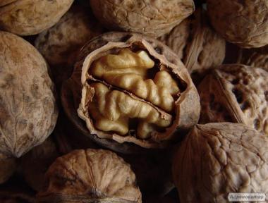 Продам орех в скорлупе. `16-`17`