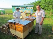 Продам пчелопакеты карпатки. Доставка по Украине