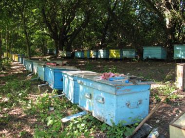 Продам 20 пчелосемей с ульями.