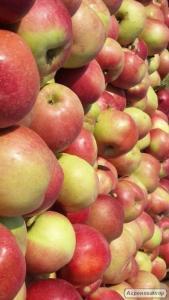Яблоко оптом  продажа