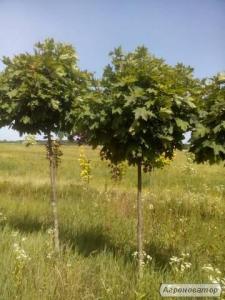Садівництво, озеленення, ландшафтний дизайн.