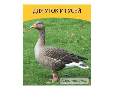 Комбикорма ТМ BEST MIX для гусей