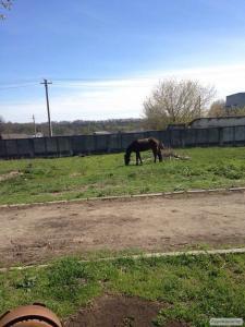 Продам коня звуть Тотілас