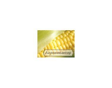 Продам кукурузу фуражную FOB