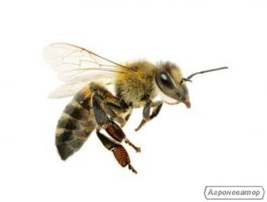 Бджолині сім'ї у Харкові
