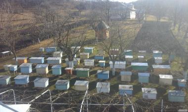 Продам 500 пчелопакетов свои!
