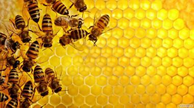 Продам / БДЖІЛ(розплід), продам мед\мед в сотах КИЇВ