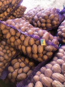ФГ продаёт товарный картофель сорта Королева Анна от производителя