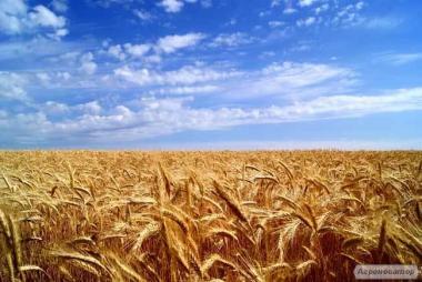 Пшеничный спирт от лучшего производителя Украины