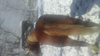 Продам коня....10 лет...детали по телефону. .