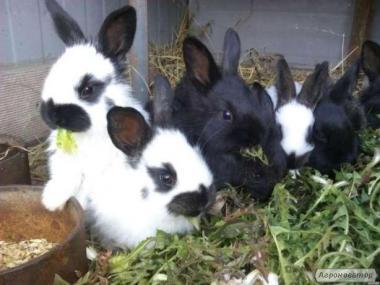 Кролики не дорого