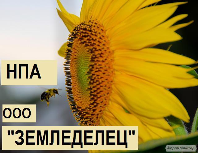 Семена Мираж,1 р,