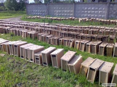 Продам пчелопакеты на Экспорт с документами