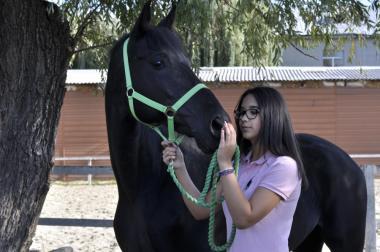 Терміновий продаж коня