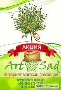 Реализация плодовых деревьев и кустарников.Сайт:http://artsad.com.ua