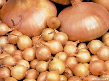 Продукция растениеводства лук севок