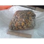 м'ясо мідії чорноморської заморожене