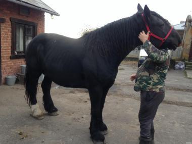 Продам  коні !