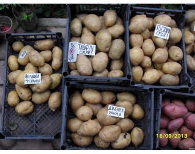 Сортовой картофель-Киранда Магда,Гренада,Кристина,Экзотик (фиолетовый.