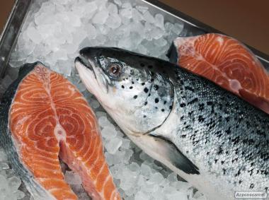 Продаю заморожену рибу оптом