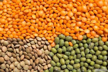 Семена чечевицы
