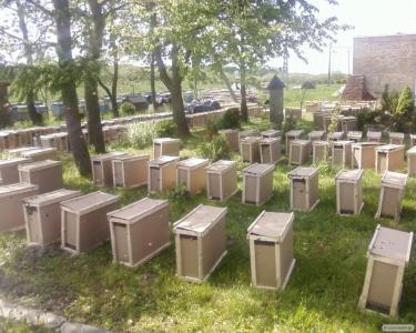Бджолопакети Карпатка з доставкою по Україні.