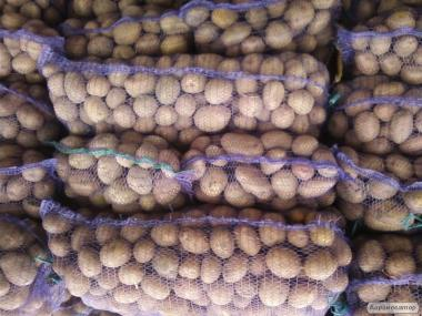 Укладемо договори на поставку картоплі опт